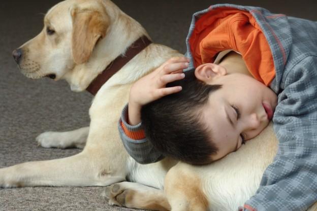 Imagen de niño y perro de la fundación bocalan